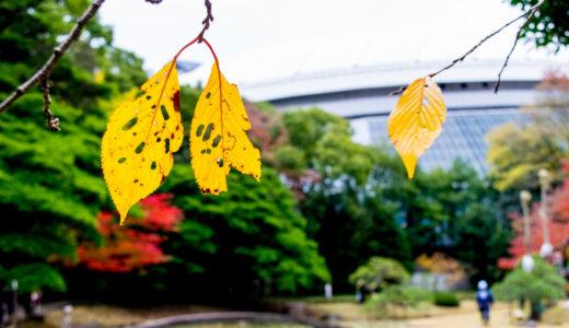 小石川後楽園 紅葉が色づき始めてました