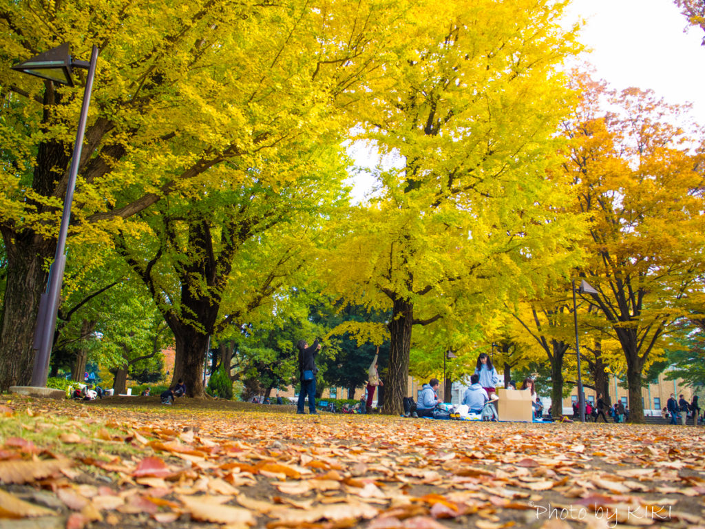 上野公園紅葉