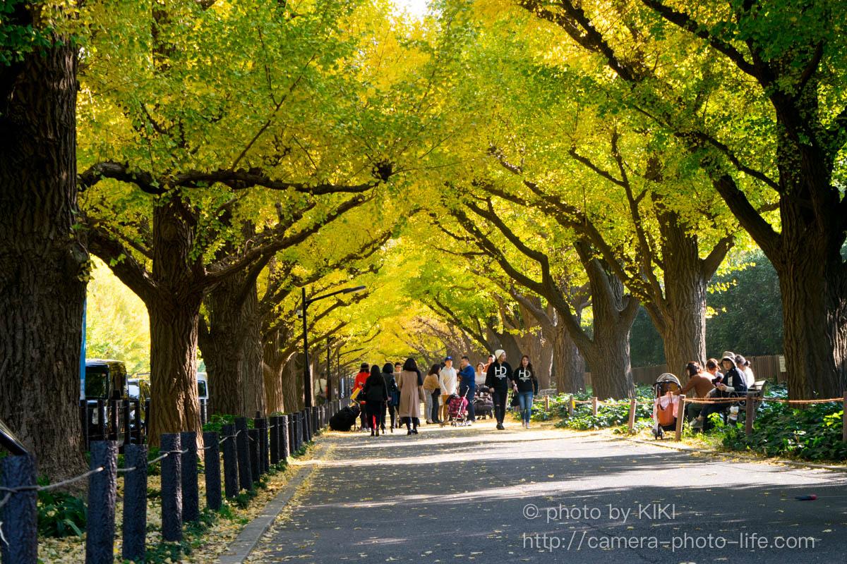 ニコンD5300 神宮外苑いちょう並木を撮影してきました