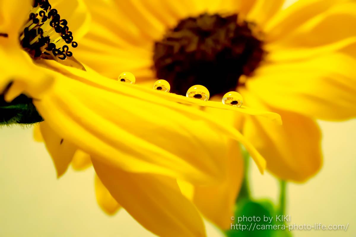 水滴に映りこんだキレイな花 撮影方法